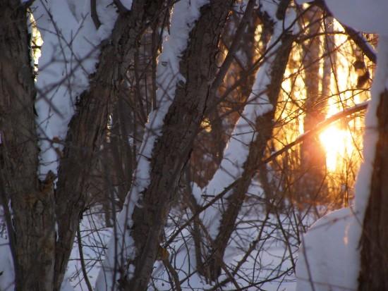 Зимний лес в Бугринской роще